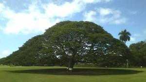 この木、何の木。回答はCMの後で
